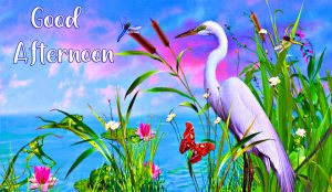 HD Lovely Good Afternoon Wallpaper