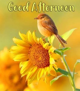 Yellow Flower With Birrd Good Afternoon Image
